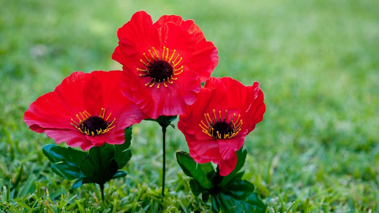 Woman Finds Out The Real Meaning Behind The Anzac Poppy